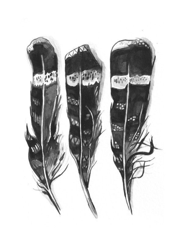 Hawk Feathers by Amanda Paulson