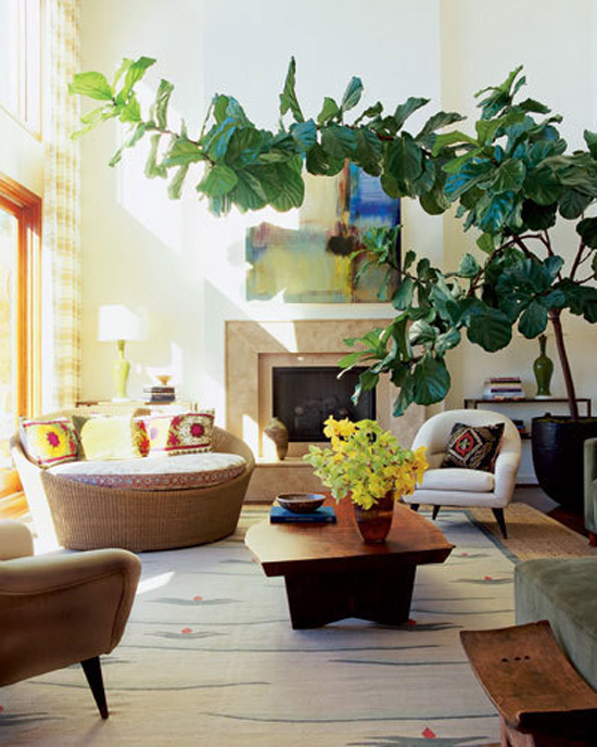 fiddle-leaf-fig-5_rect540